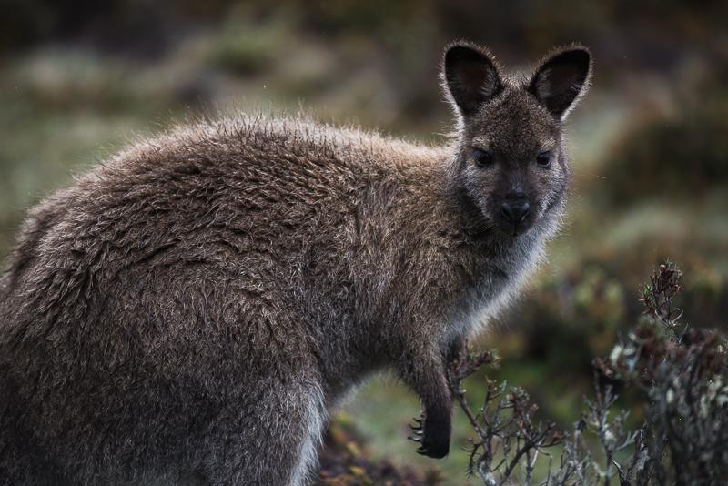 2014.12.12–2015.01.10 Tasmania0775